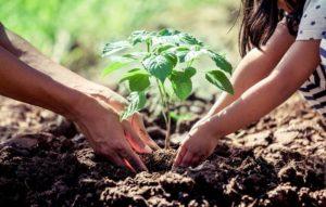 Una iniciativa para echar raíces en Selas
