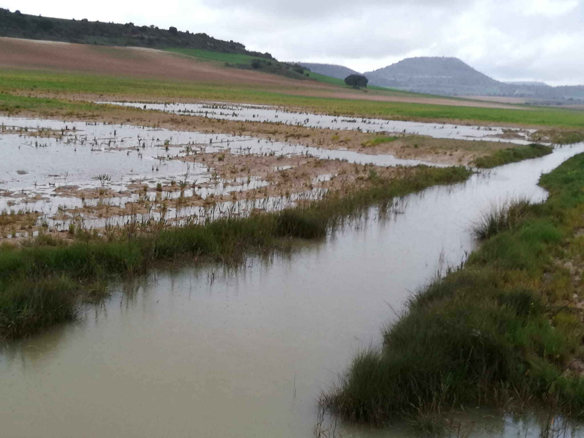 Los agricultores reclaman soluciones a las confederaciones ante la falta de limpieza en los cauces que provoca inundaciones de parcelas